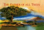 What is the story The Father of All Trees about?